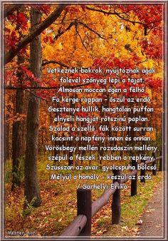 Sárhelyi Erika Őszi dal 2 I Fall, Autumn, Country Roads, Education, Wifi, Quotes, Quotations, Fall Season, Fall