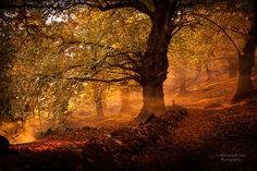 Fotografia autunno da Gennaro Di Iorio su 500px