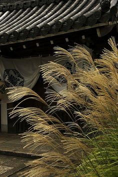 Fall in Kyoto--one of the 7 grasses of autumn