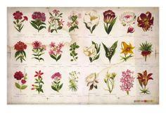 Vintage Botanical Premium Poster at Art.com