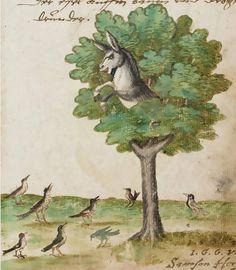 Catch Me If You Can . «Donkey in the tree» Studbook of Joh. Mich. and Joh. Carl Heuß, c. 1560, Ms. Karlsruhe 2978, f. 7v, Badische Landesbibliothek Karlsruhe. http://digital.blb-karlsruhe.de/blbhs/content/pageview/1183455