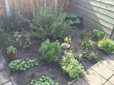 Herbs, Vegetables, Garden, Flowers, Plants, Garten, Lawn And Garden, Herb, Vegetable Recipes