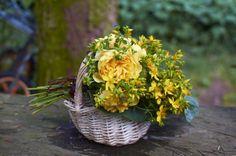 Anglická růže Graham Thomas a třezalka tečkovaná