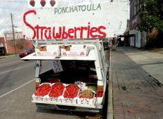 Ponchatoula, strawberry capital of the world - North Shore - Louisiana