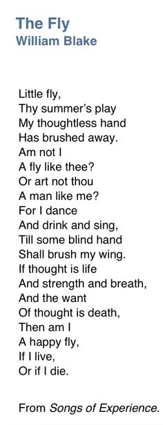"""The Fly"" -- William Blake Soul Poetry, Poetry Quotes, Words Quotes, Wise Words, Short Friendship Quotes, Beautiful Poetry, Beautiful Words, Songs Of Innocence, Contemporary Poetry"