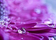 water flower - Pesquisa Google