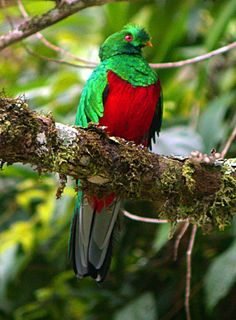 Colombia - AVES de Colombia