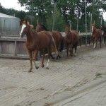 Ferien auf dem Reiterhof: Kindheitstraum von Pferdeliebhabern