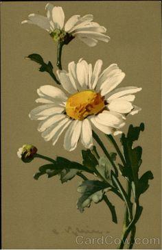 Daisy: C.Klein