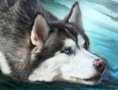 Siberian Husky Mixed Media  - Siberian Husky Fine Art Print