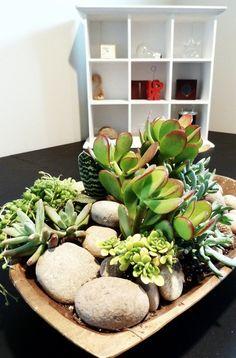 Bold Beautiful Brainy   Succulents indoors