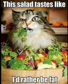 Top 30 Funny cat Memes #Humor