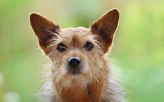 Tag des Mischlingshundes - feiert eure Vierbeiner - aber auch die Rassehunde :-)