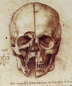 View of a Skull, c. 1489 - Leonard De Vinci - Drawing