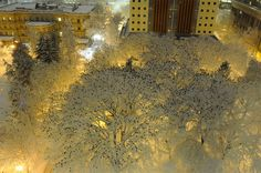 Thousands of Birds Photographed Atop Snow-Laden Trees in Downtown Portland Oregon