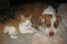 Help support Kaya the Pitbull Needs Help .