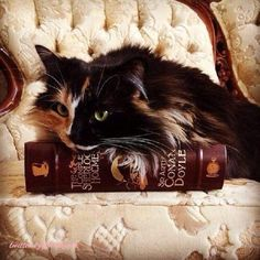 Sherlock Holmes and the Calico Cat Crazy Cat Lady, Crazy Cats, Gato Calico, Cat Reading, Reading Room, Beautiful Cats, Beautiful Pictures, Pets, Belle Photo