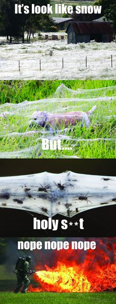 This was happening in England last summer. When there's a bumper crop of spiders, all the Internet spider-phobes raise their nope-scopes.  Just remember, the spiders would not be there, if there wasn't something to eat.  Same goes for the ones you find in the house too.