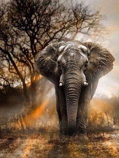 Diamantmalerei - Wilder Elefant Diamond Painting Type: Full Diamond Painting with Full Drill Diamond Photo Elephant, Bull Elephant, Elephant Love, Elephant Quotes, Elephant Pictures, Elephants Photos, Baby Elephants, Elephant Pattern, Elephant Photography
