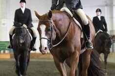 Eight hunter under saddle tips from AQHA Professional Horsewoman Leslie Lange. Horse Riding Tips, Horse Tips, Hunter Under Saddle, Horse Showing, Horse Magazine, Soft Eyes, Showing Livestock, American Quarter Horse, Training Exercises