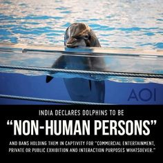 "This makes me so happy! ""India Declares Dolphins ""Non-Human Person"", Dolphin Shows Banned 