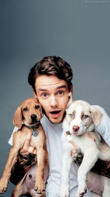 Liam Payne with puppies is the cutest thing ever Niall Horan, Zayn Malik, One Direction Wallpaper, One Direction Pictures, I Love One Direction, Liam James, Liam Payne, Liam 1d, Louis Tomlinson