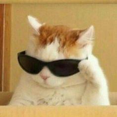 Gato aesthetic , cat , cat aesthetic , wallpaper aesthetic Cute Baby Cats, Cute Little Animals, Cute Funny Animals, Funny Animal Pictures, Funny Cats, Funny Photos, High Pictures, Cute Cat Wallpaper, Beautiful Wallpaper