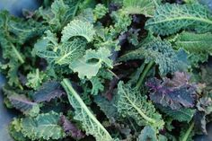 New at the Grocery Store: Baby Kale + 10 Ways to Use It Red Russian Kale, Kale Sprouts, Red Kale, Endangered Plants, Kale Recipes, Vegetarian Recipes, Healthy Recipes, Wildflower Seeds, Backyard Farming