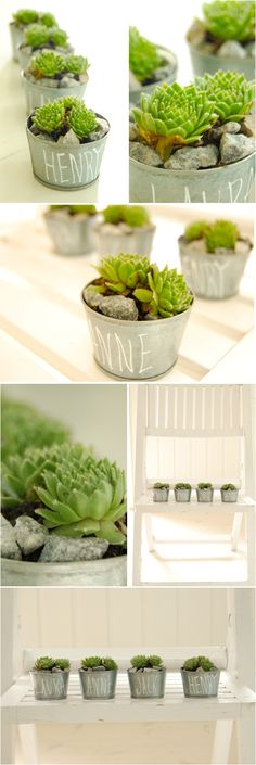 """Your guests will love these fresh and modern favors -- that they can keep forever! We filled tiny zinc pots with succulents and wrote the name of each guest on the pot with white paint. Eventually, your guests will be able to re-pot these or plant the succulents in a garden as they grow larger. The paint is easily removed with a damp cloth so the container can be re-used. It's a perfect way to show your guests that you love them and also love the earth! Enjoy!  Here's what you will need:4""""…"""