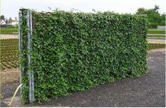 Murs Anti Bruit   Quick Set Green   Des Solutions Vertes Pour Embellir  Votre Extérieur