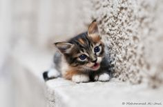 :3 by  Mohammed Al-Jawi , via 500px