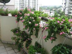 アパートやマンションでも大丈夫☆ベランダガーデニングで理想のお庭を実現させちゃいましょ♪   folk