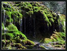 Gémenos, Forêt de Saint Pons, cascade... http://mistoulinetmistouline.eklablog.com/