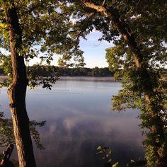 Swans on the North Lake Michigan