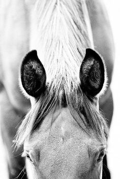 black and white horse photography More