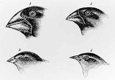 Evolutie, zo zit het! | Achtergrond | Biologie | darwin, darwinjaar, evolutie, schepping - NEMO Kennislink