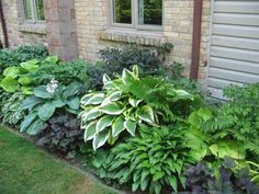 Hostas and ferns - like my side yard but more interest with variegated leaves and a few dark plants