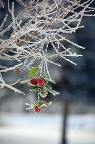 Icy Mistletoe