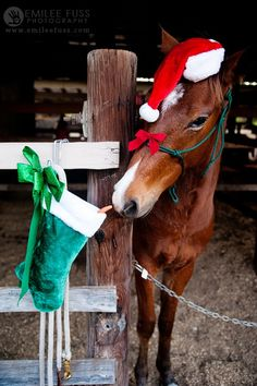 PetsLady's Pick: Cute Naughty Christmas Horse Of The Day Cute Horses, Horse Love, Beautiful Horses, Animals Beautiful, Cute Animals, Pretty Horses, Pictures With Horses, Horse Photos, Cute Animal Pictures