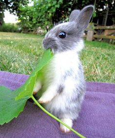 This #cute #bunny eating a huge leaf !! Are you all right? Having a food?