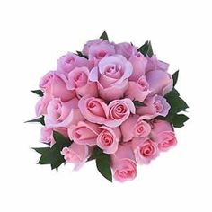 Pink roses......