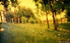 Vắng những vì sao trên đồng cỏ   Ngày gió mùa về trên cành cây khẳng khiu trước nhà hơi thở tỏa khói run run qua những bóng hình xuôi ngược trên hè phố. Cái lạnh thẳm sâu trong ý nghĩ Khải ngồi bên mép giường nhìn bộ đồ cưới được là phẳng chỉn chu. Bộ đồ Vest thơm mùi Mosa chất vải mới bóng bẩy tôn lên dáng vẻ lịch lãm của chú rể trong cái thời khắc trọng đại nhất của cuộc đời bộ vest sẽ khoác lên mình phối kiểu hòa hợp với bộ đầm cô dâu đi trong tiếng vỗ tay tán thưởng của bao người. Hạnh…