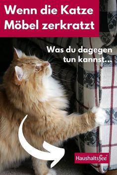 Katzen zerkratzen unsere Lieblingsmöbel in der Wohnung nicht aus Böswilligkeit, um uns zu ärgern oder sich für die verspätete Mahlzeit zu rächen. Sie tun dies vor allen Dingen, um ihre Nägel in Ordnung zu halten. D. h. um sie zu schärfen und alte Teile zu lösen. Das Verhalten ist also ganz normal und notwendig für die Hauskatzen. Um nun aber zu vermeiden, dass die Katzen sich gleich auf deine neue Couch stürzen, sollte man Alternativen anbieten.