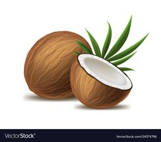 The benefits of coconut oil While coconut oil is encouraged. Are you going to get these great benefits? Dry skin It . Coconut Images, Coconut Oil Health Benefits, Coconut Shell Crafts, Object Drawing, Coconut Oil For Skin, Tropical Fruits, Aesthetic Stickers, Food Illustrations, Decorative Bowls