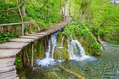 The Plitvice National Park consists of a dense beech forest surrounded by upper lakes in the Dolomite Valley and the smaller, shallower lower lakes. Description from croatianvillaholidays.com. I searched for this on bing.com/images