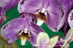 Purple Phalaenopsis Orchid Fine Art Photo Print by BeckyTylerArt, $20.00 #etsy #smallbiz #macro #photography #orchid #purple #flower #flora
