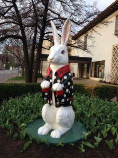 Kansas City Rabbit