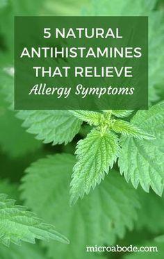 Allergy Remedies 5 Natural Antihistamines That Relieve Allergy Symptoms Herbal Cure, Herbal Remedies, Health Remedies, Eczema Remedies, Seasonal Allergy Symptoms, Seasonal Allergies, Dust Allergy Symptoms, Food Allergies, Health Benefits