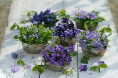 violets … pretty on the table