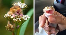 Animals. They've been around for longer than us, and they'll probably be around long after we've gone. Why? Because animals know the secret of life. And what, I hear you ask, is that secret? It's happiness. Just look at these pictures to see what we mean.